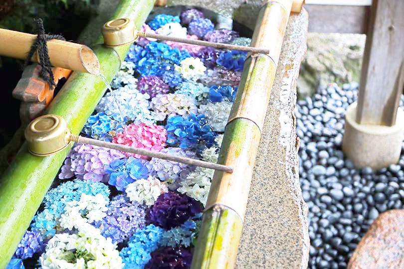 水と紫陽花